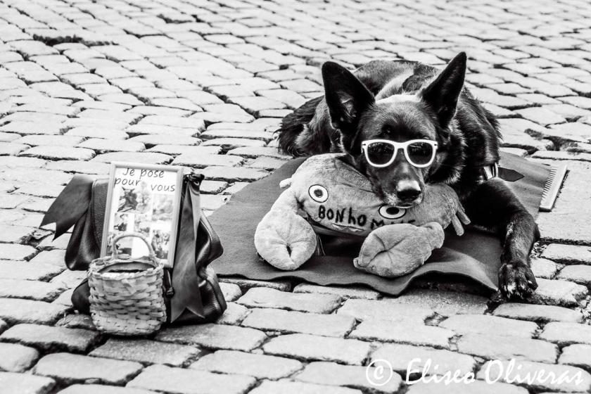 The Beggar Dog-2009
